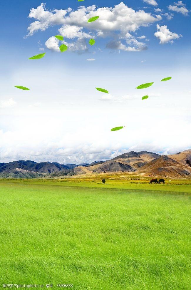 旅游展板草原
