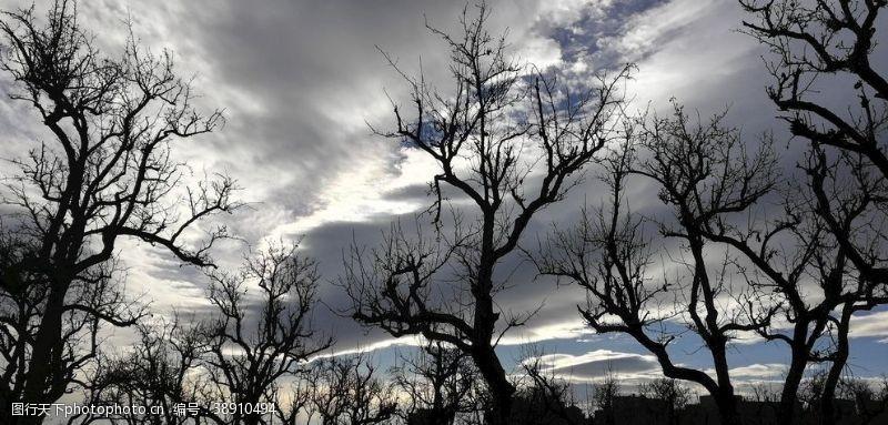 树木剪影古树树林
