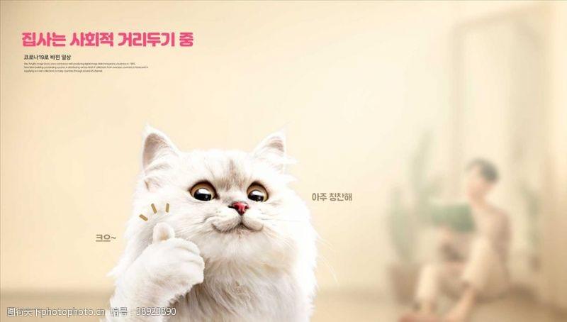 竖拇指 小猫海报图片