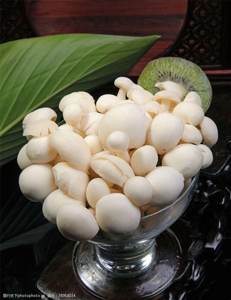菇类 菌类食材图片