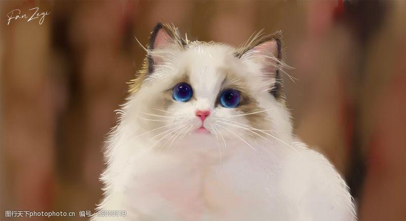 蓝眼睛 可爱萌喵布偶猫插画图片