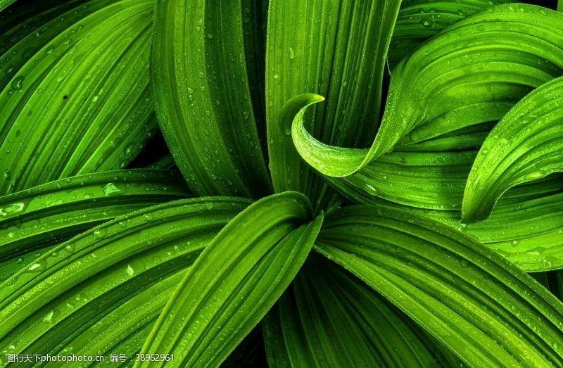 绿背景 绿色质感纹理图片