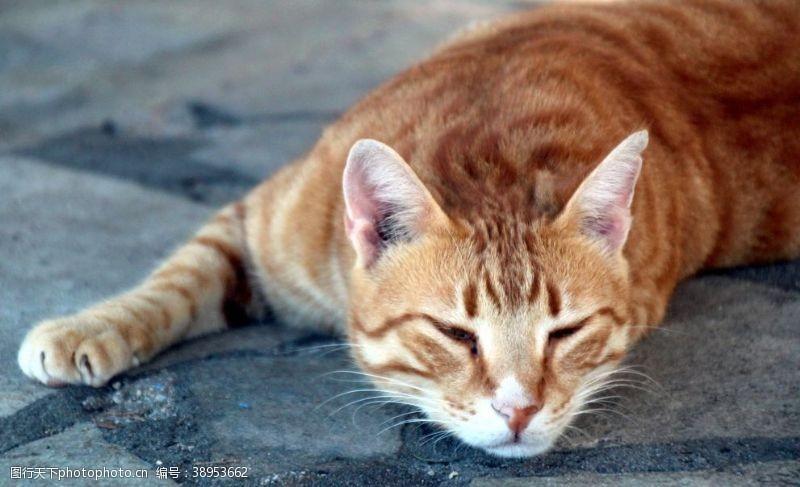 宠物之家 猫图片