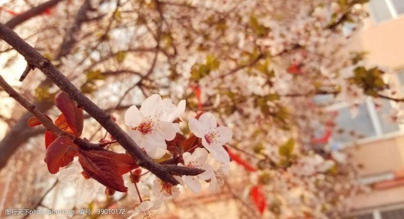 校园一角 校园初春图片