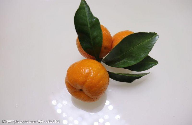 生物世界 小蜜橘图片