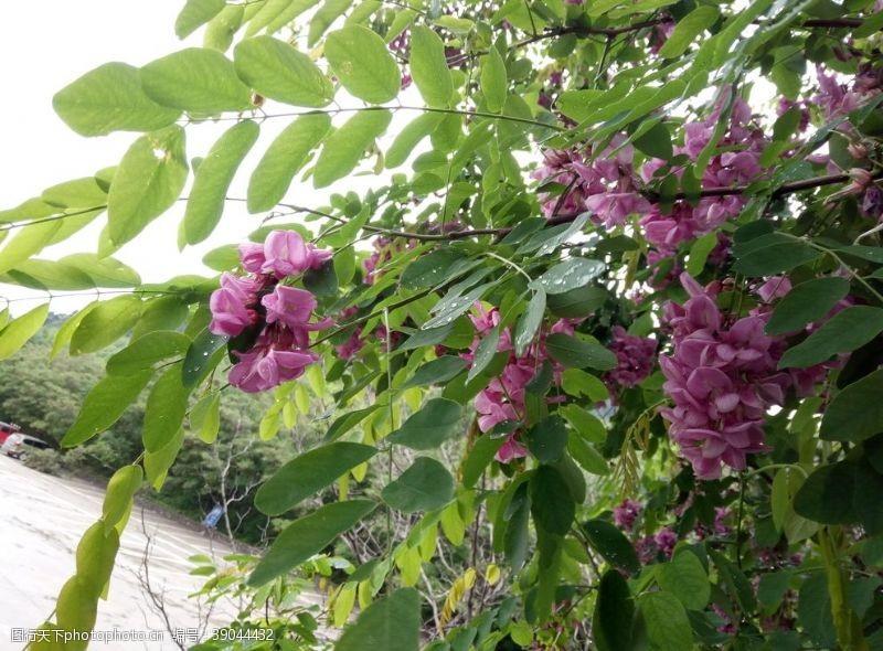 紫色花纹 紫色花图片