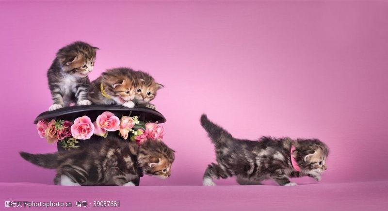 宠物广告 动物世界图片