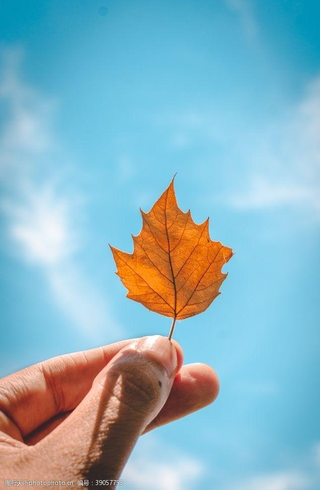 立秋秋分 树叶图片