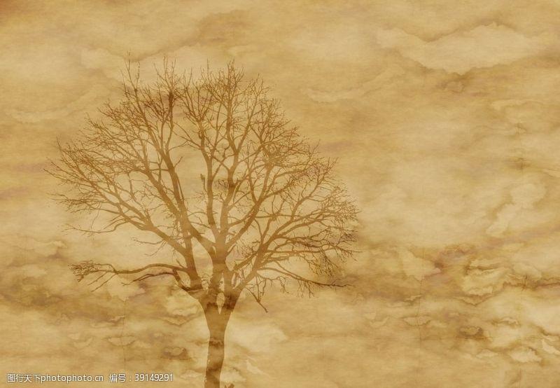 北欧 树背景图片