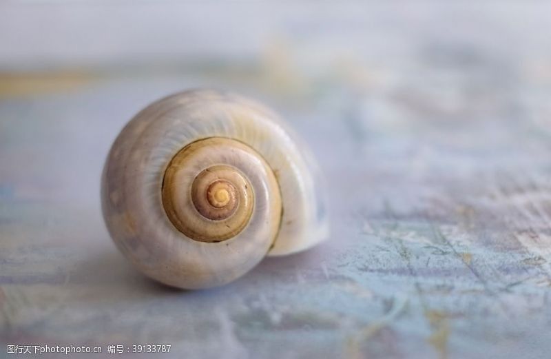 特写 蜗牛图片