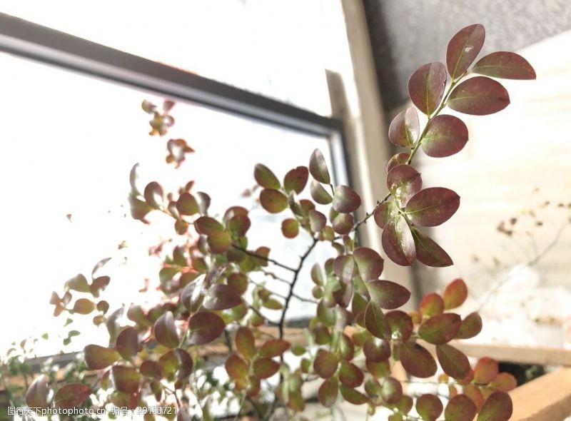 北欧 紫檀小叶紫檀图片