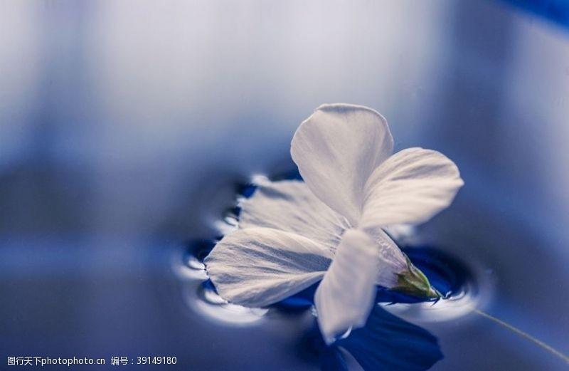 水草 水面花朵图片